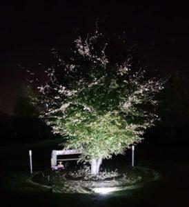 Podświetlone drzewo